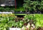 gardenGalery2