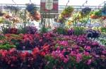 gardenGalery3