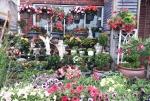 gardengalery6