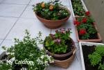 gardening1_Mycaldron