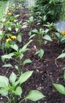 gardening2_MyCaldron
